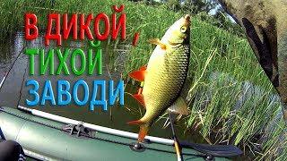 Рыбалка на поплавок.КРАСНОПЕРКА в ДИКОЙ,ТИХОЙ ЗАВОДИ.