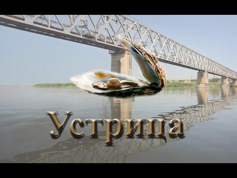 Русская Рыбалка 3.99 Устрица