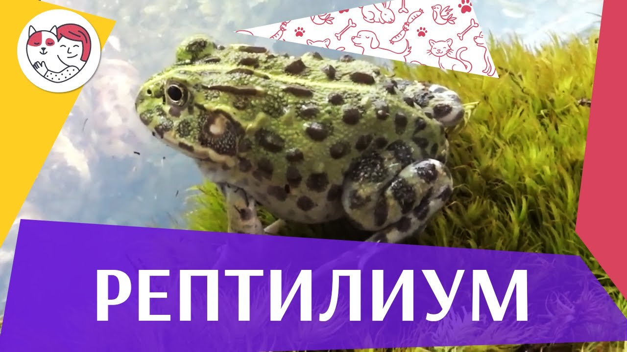 Выставка-продажа «Рептилиум»  на ilikepet