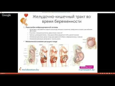 Изменения пищеварительной системы во время беременности