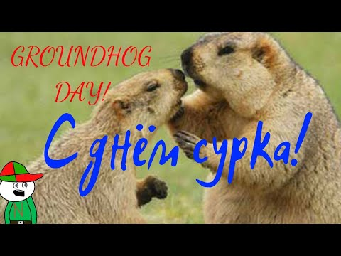 С днем сурка!\\Groundhog Day!