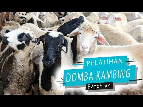 Pelatihan Bisnis Domba Kambing Aqiqah #Batch 4