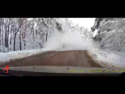 В Воронеже дерево упало на дорогу перед автомобилем