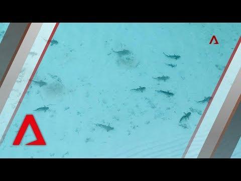 Sharks return to Thailand's famous Maya Bay after tourist ban