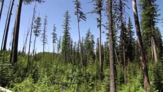 Trip video of Quartz Lake Loop