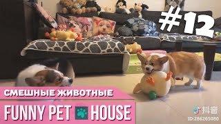 СМЕШНЫЕ ЖИВОТНЫЕ И ПИТОМЦЫ #12 СЕНТЯБРЬ 2018 [Funny Pet House] Смешные животные