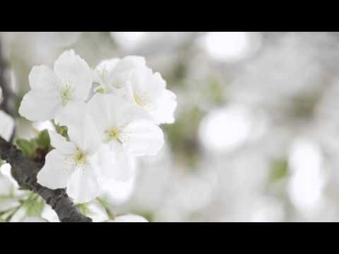 Сколько стоит цветок мужское счастье