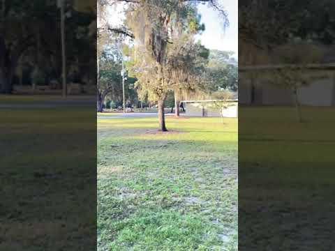 video of loop 1