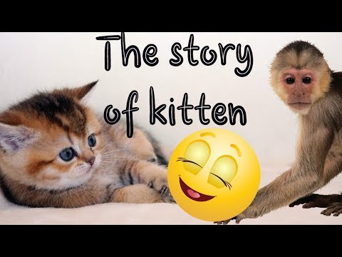 Love the kitty and monkey