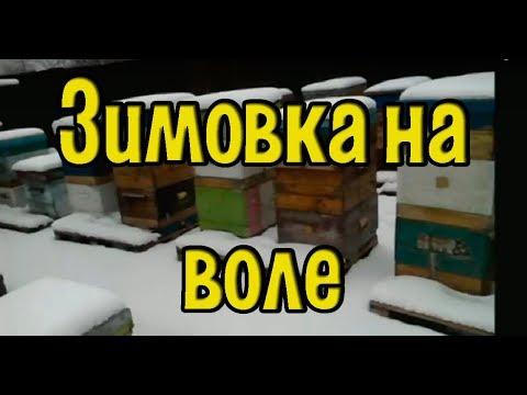 Зимовка пчел на воле 8 декабря 2018