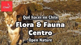 Qué hacer en Chile: Flora y Fauna Centro - Naturaleza Abierta