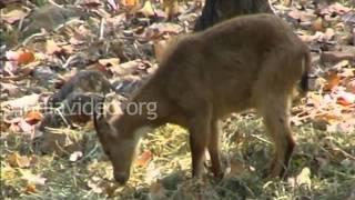 Malsi Deer Park, Mussoorie