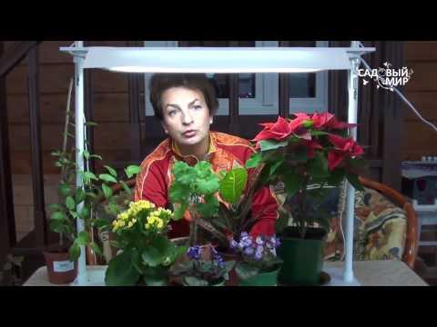 Чем досвечивать комнатные растения.  Светильник 5 урожаев ОЖЗ