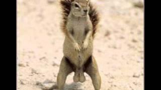 I got big balls squirrel