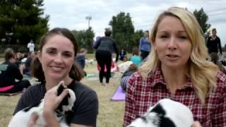 Phoenix Magazine - Goat Yoga Madness