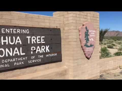 Video Joshua Tree NP Desert Wildflowers 2017 - Joshua Tree National Park, CA
