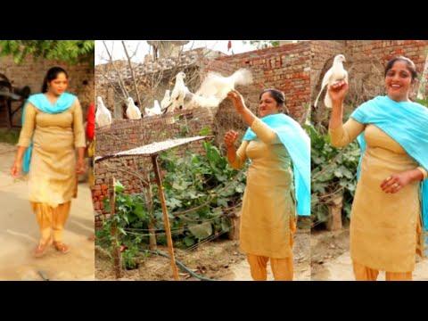 kabootar ja ja ja...💌💌... Village Life of Punjab 🖤 Indian rural life