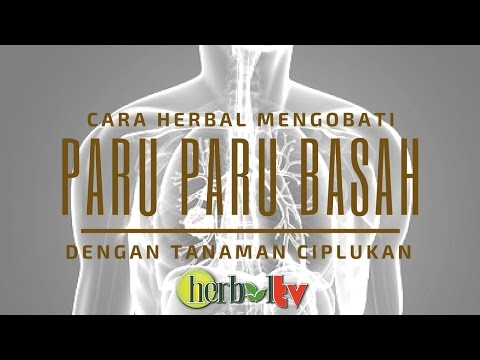 Video Obat Paru paru Basah / Bronkitis Dengan Tanaman Ciplukan | Benefits of Ciplukan for Health