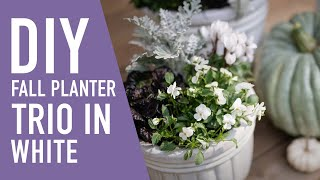 DIY Fall Planter Trio In White  || West Coast Gardens