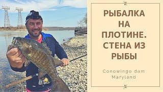 Рыбалка в яропольце на плотине