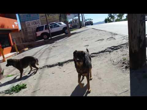 Dazer II auyentador de perros