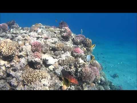 Schnorcheln in Ägypten: Korallen und Fische mit der ACTIONPRO X7 gefilmt