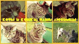 Коты и кошки. Наши любимцы
