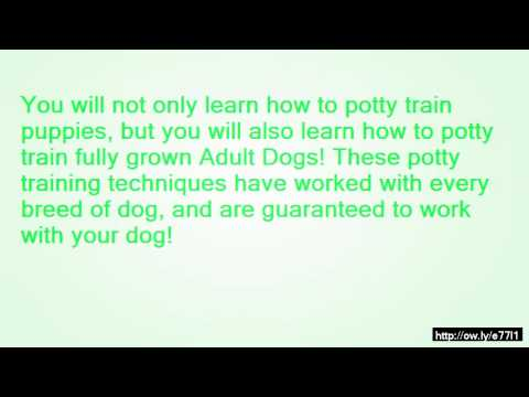 Dog Training: Cool Dog Trick:) How To Teach Your Dog To Stand On Your Back