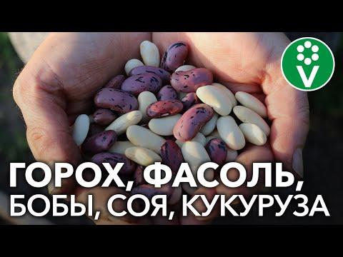 , title : 'Секреты выращивания бобовых растений. Запись семинара