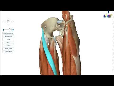 Lacide à la charge sur les muscles