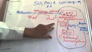Sulphur Containing Amino Acid -----Methionine