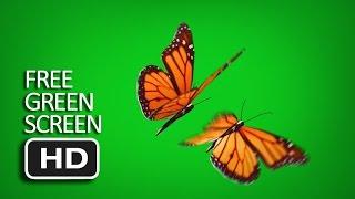 Free Green Screen - Flying Butterfly