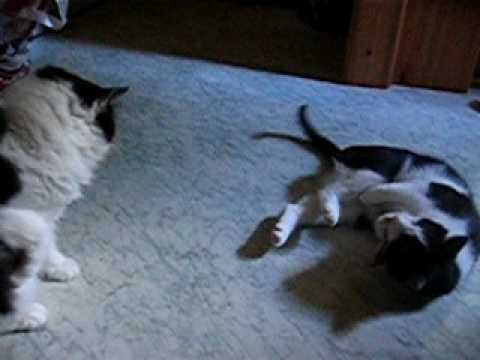 Katzen Gipsy, Felix und Duftsaeckchen - Cats Gipsy, Felix and flavour bag