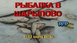 Рыбалка зимой в шарыпове
