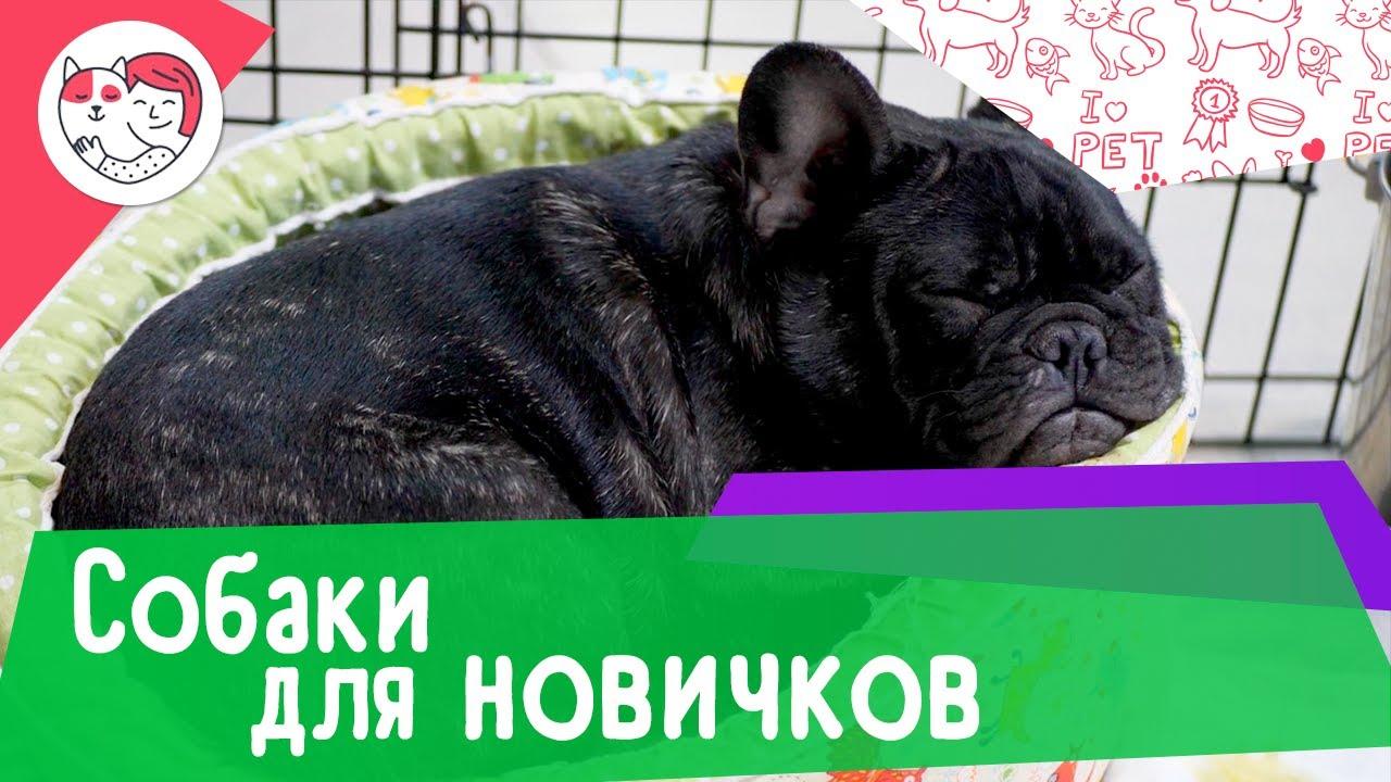 Топ-6 пород собак для начинающих собаководов