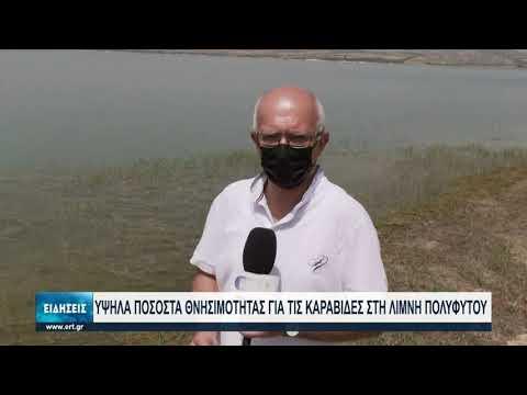 Η ξηρασία πλήττει τις καραβίδες της λίμνης Πολυφύτου Κοζάνης | 3/7/2021 | ΕΡΤ