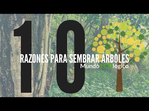 10 razones para sembrar arboles