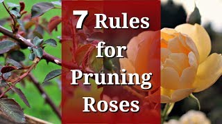 7 Rules for Pruning Roses