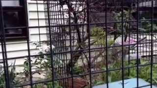 BUILDING YOUR VERY OWN OUTDOOR CAT ENCLOSURE (PART TWO)