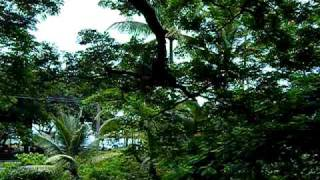 preview picture of video 'View from Lilikoi House, Vacation rental in Hilo, Hawaii'