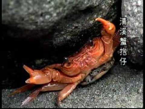 海岸山脈臺東蘇鐵保護區四