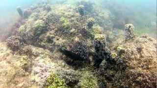 preview picture of video 'Mauritius - Unterwasserwelt Video GoPro2 HD'