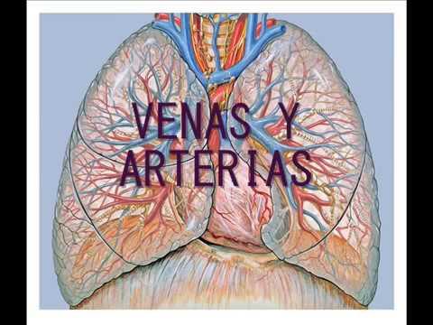 REG arterial tipo hipertensiva 2 grados con insuficiencia venosa