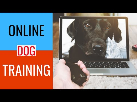 Online Dog Obedience Training - YouTube