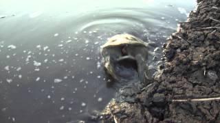Рыбалка на москва реке в дзержинском