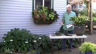 How Late in the Fall Can I Plant Hostas?