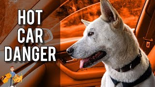 How Long Can You Leave Dogs In Hot Cars?  (this is how hot they get!)