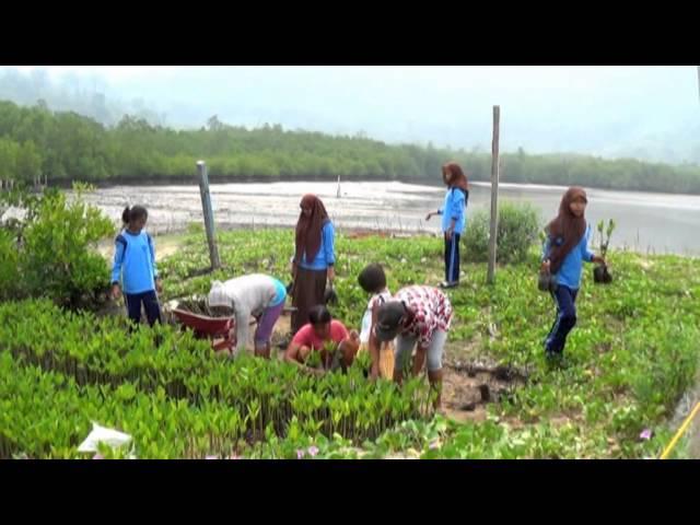 YAKKUM Emergency Unit - Anak Nagari Sungai Pisang Peduli Mangrove