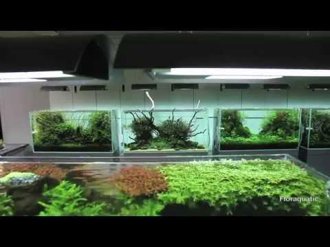 Aquarium - Aquascape - ADA Nature Aquarium - Live Planted Fish Tank
