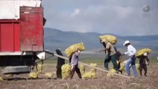 México Social - Jornaleros agrícolas: a un año de San Quintín